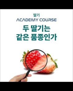 [온라인코스]두 딸기는 같은 품종인가