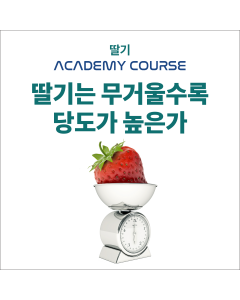 [온라인코스]딸기는 무거울수록 당도가 높은가